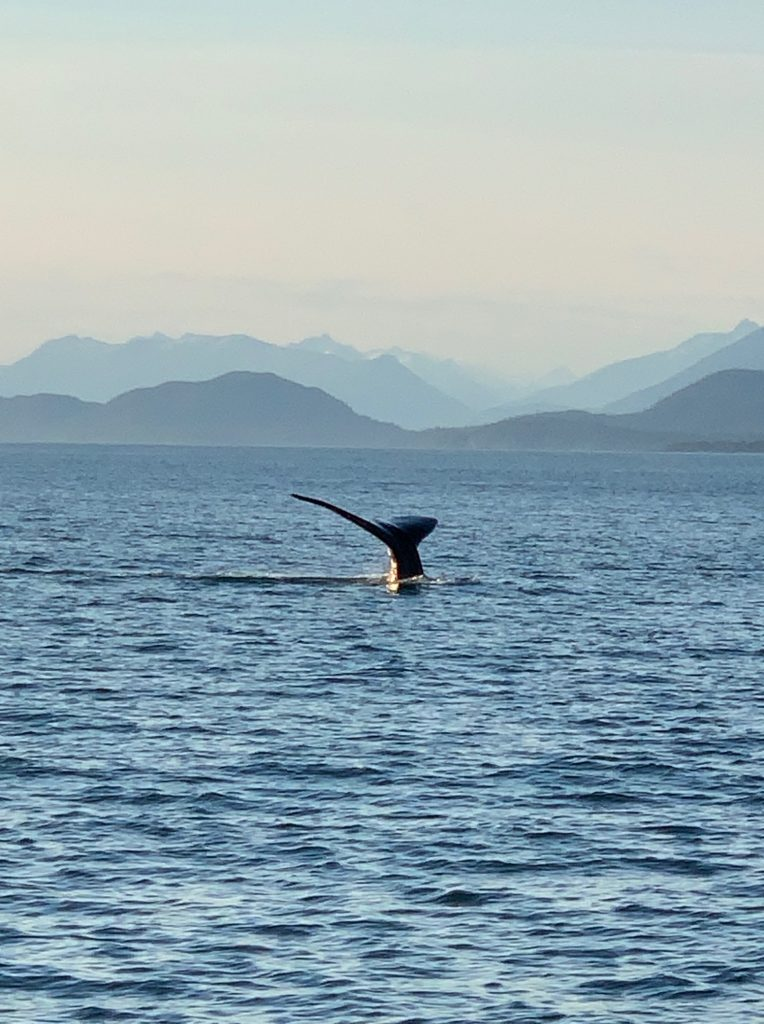 Whale Watching - Juneau Tours